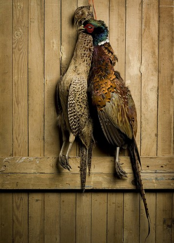 brace of pheasants